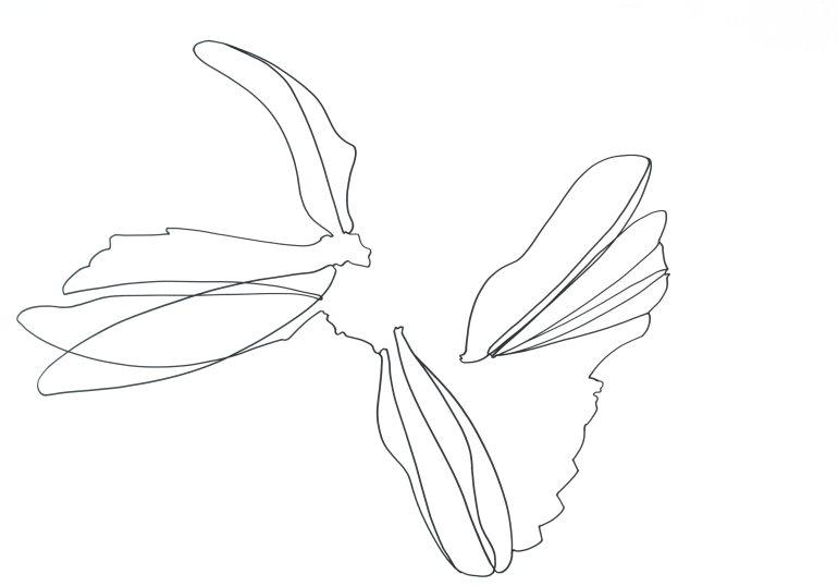 Libellen_0025